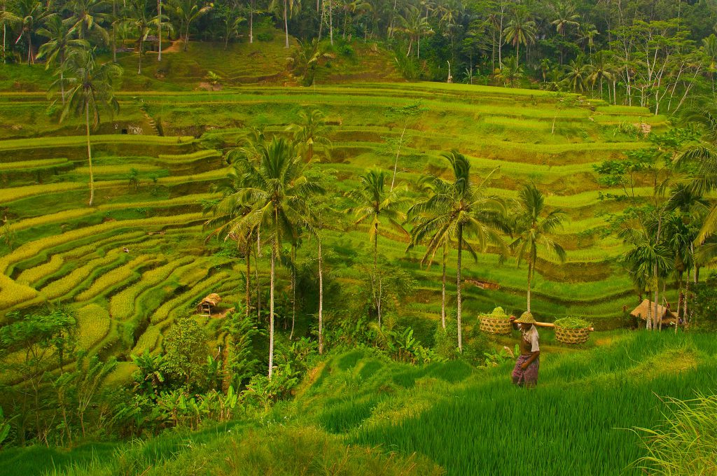ubud honeymoon