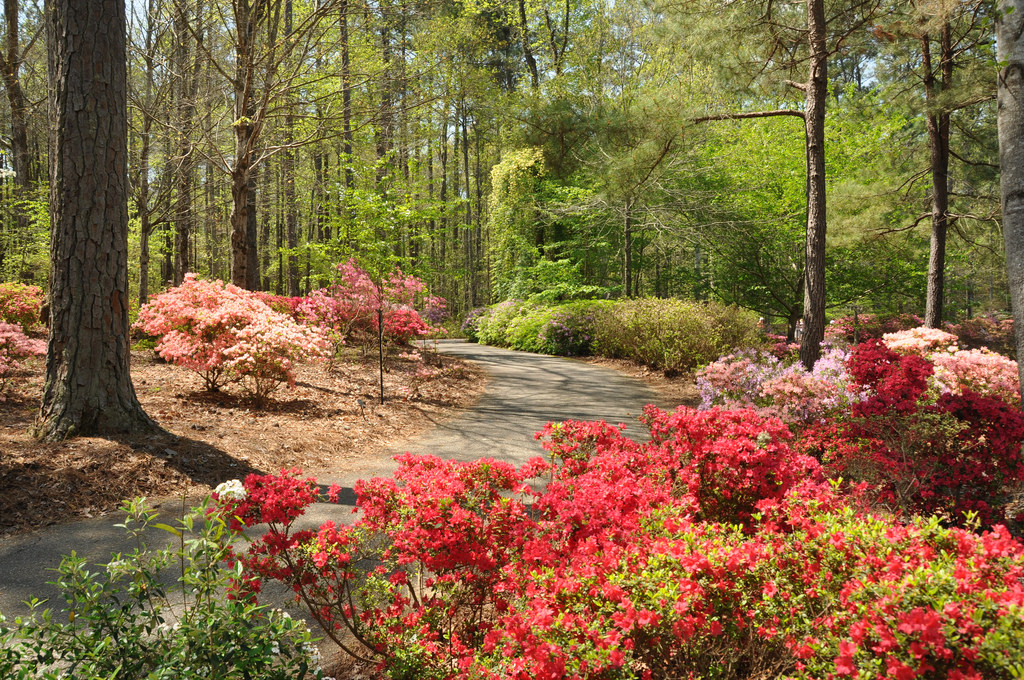 vacation in georgia, vacation spots in georgia